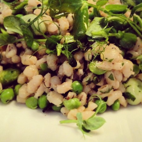Broad beans, peas, mint and pearl barley